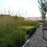 Allium BV Broek op lange dijk